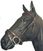 Wyvern Padded Flash Bridle